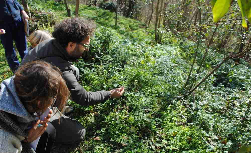 Erbe selvatiche raccolta e cucina 19 maggio 2018